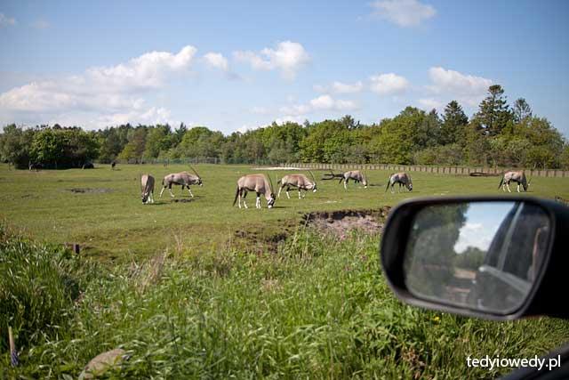zoo safari w Givskud 20130530T154005_MG_1337
