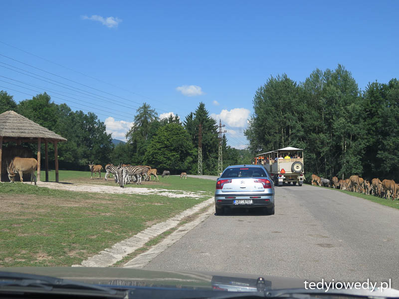 Czeskie safari i Skalne Miasto 20140723T104244IMG_2896