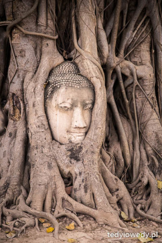 Ayutthaya 20160217T114853IMG_4810