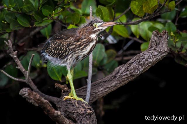 Everglades 20150430T161158_MG_9074