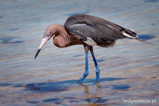 Florida Keys 20150501t200357_mg_0604