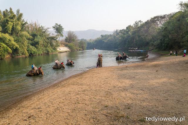 przejażdżka na słoniu